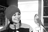 PHOTO BY KEN HANN - Wild Wings Lori Warner holds Quiver the kestrel at last years Mendon Ponds Winterfest.