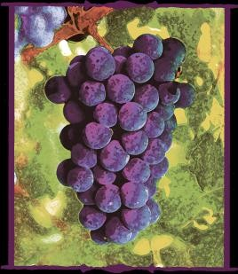 grapes1jpg