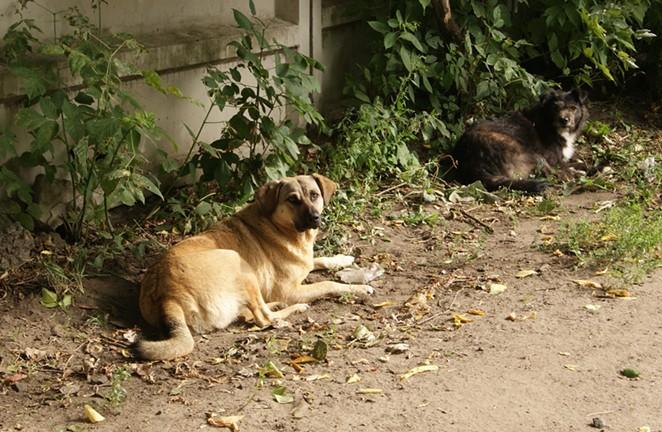 the_stray_dogsjpg