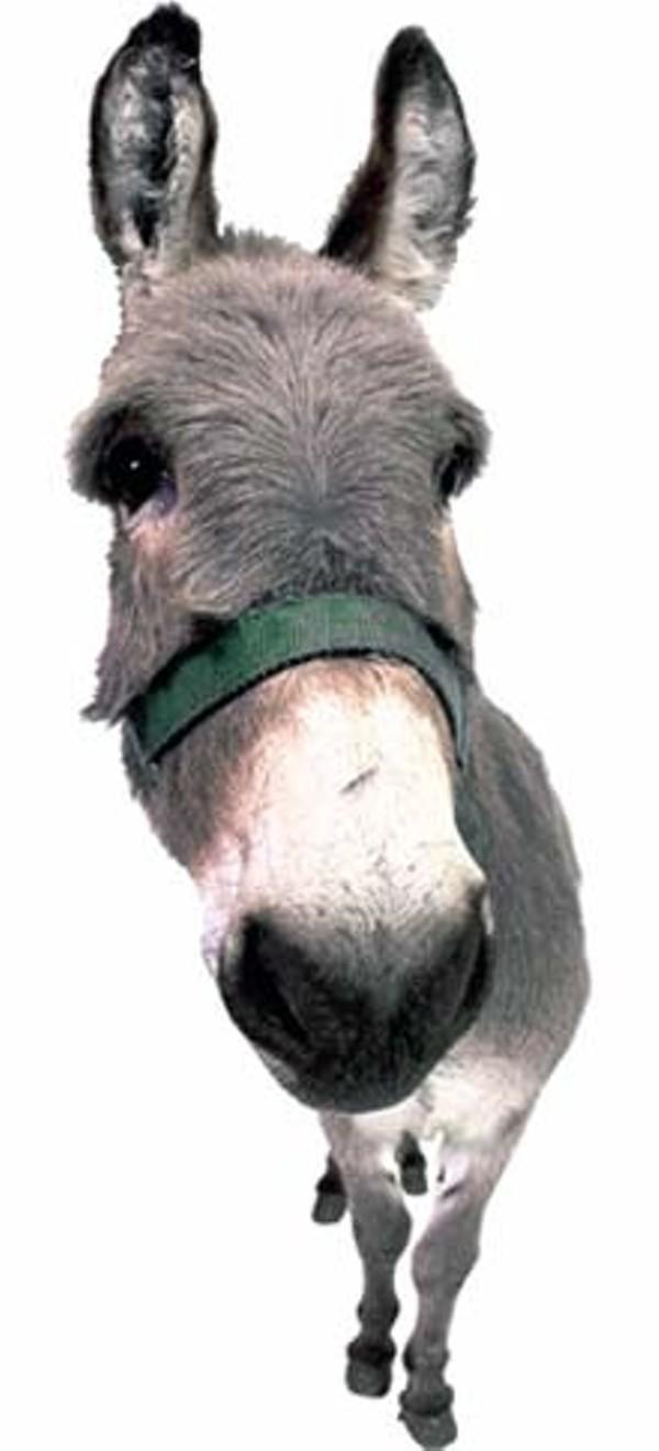 feature-donkey_220jpg