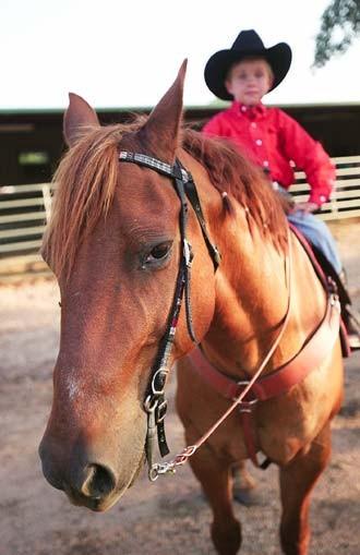 feat-horses2_330jpg