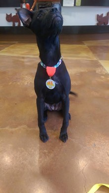 SAPA! - Bella Rose showing off her Fiesta medal.