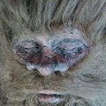 Bigfoot is Coming to Town Feb 19-23