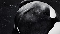 """Blackfish"" Documentary Echoes Seaworld San Antonio Troubles"