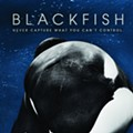 'Blackfish' Out on DVD; 10,000 + Urge SW Airlines to End Ties with SeaWorld