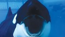Can Captivity Kill?: New documentary targets SeaWorld