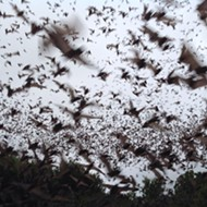 City Approves Deal To Protect Bracken Bat Cave