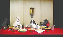 food_doggydining_cmykjpg