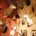 76. Visit The Buckhorn Saloon & Museum