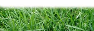 feature-grass_330jpg
