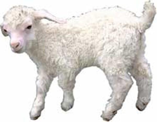 food-lamb3_220jpg