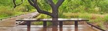 bench-38d1deef5b.jpg