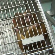 Humane Society: Texas Biomed Violated Animal Welfare Act