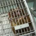 Humane Society: Texas Biomed Violated Animal Welfare Act