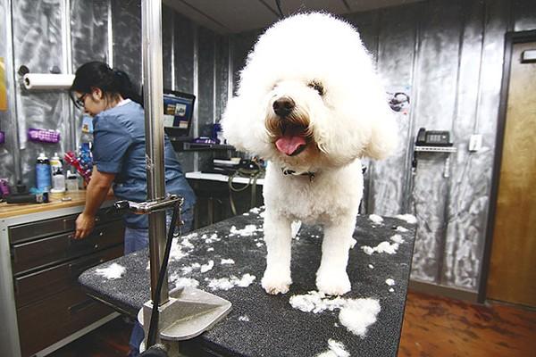 Lucy's Doggie Daycare