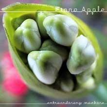 music-apple-cd_220jpg