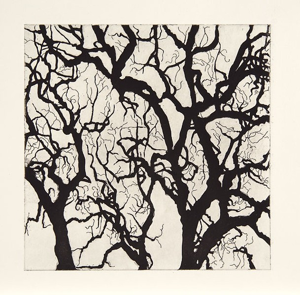 Nate Cassie, Sheet from Suite of Trees, 2011. Aquatint. Courtesy McNay Art  Museum.