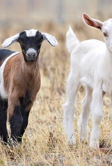The USDA sent a formal warning to an animal research facility in Kerrville.