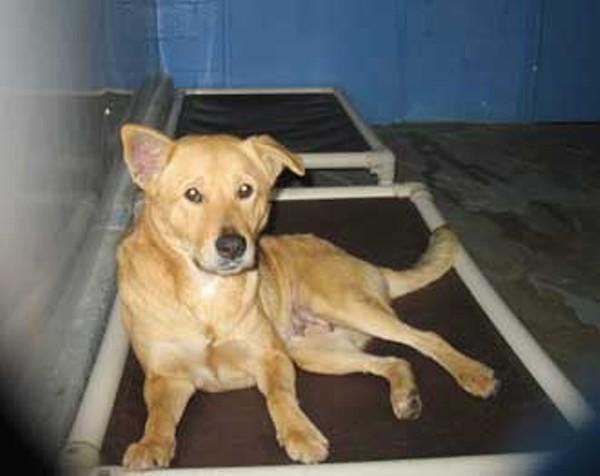 news_animalcare_330jpg