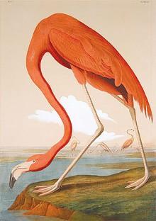 arts_flamingo_cmykjpg