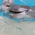 PETA targets SeaWorld San Antonio