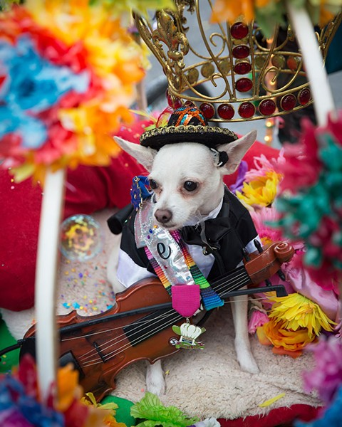 Pets are often among King William Fair's best dressed guests. - COURTESY