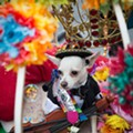 15. Dress Your Dog Up For Fiesta