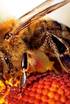 Pranayama and the humming bee breath