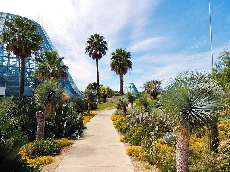 San Antonio Botanical Garden's Lucile Halsell Conservatory - COURTESY