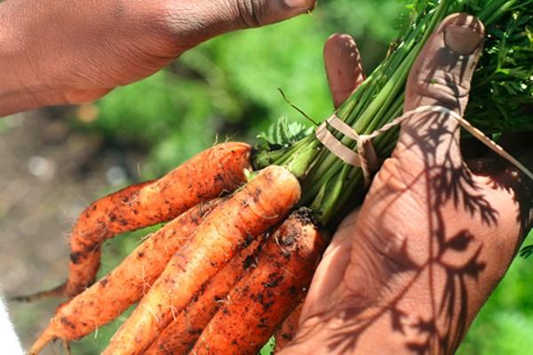 carrotsrealfoodchallengejpg