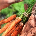San Antonio mobilizing local food economy with Policy Conference
