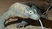 San Antonio Zoo Fire Kills Komodo Dragon