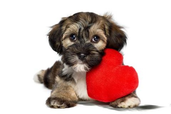 Adopt a pawsitively lovable dog this Valentine's Day. - COURTESY