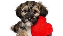 SAPA Will Help You Find Your 'Furry Valentine'