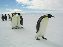 screens-penguins5_330jpg