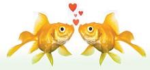 screens_kissfish_cmykjpg