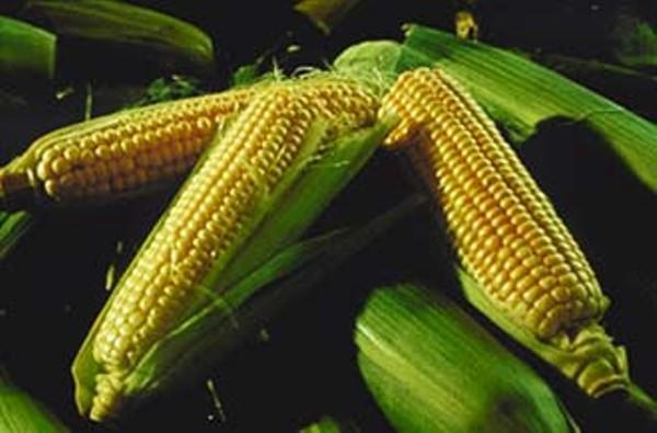 food-corn_330jpg