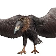 The Texas-sized 'monster' bird that created a huge flap back in 1975