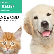 10 Best CBD Oil for Dogs to Treat Your Pet With
