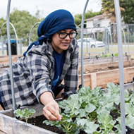 Palo Alto College Community Garden Donates 400 Pounds of Produce to San Antonio Food Bank