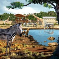 Giraffes Are Returning To San Antonio Zoo With New Enclosure