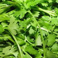 Shitty Cilantro Caused Several Years Of Intestinal Illness In America
