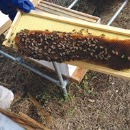 Turning Hive Problems into Bee Solutions