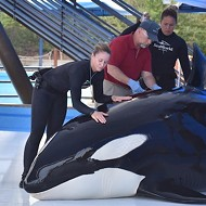 SeaWorld San Antonio: Orca Dies from Fungal Infection