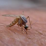 San Antonio Metro Health Investigates 33 Possible Cases of Zika Virus