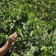 Brown Coffee Co. Goes Hunting for Top-Quality Beans in Upcoming Documentary