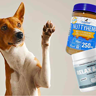 5 BEST CBD Dog Treats & Biscuits (2021)