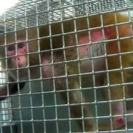 Feds Give $40 Million to Local Primate Research Center Accused of Animal Mistreatment