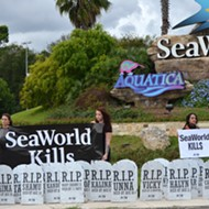 New Halloween Attraction at SeaWorld: An Orca Graveyard