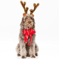 Santa Paws Holiday Rescue Tour Comes to the Tobin